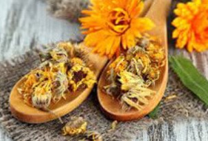 Calendula officinalis Extract