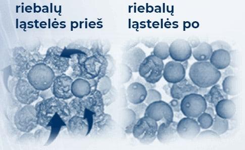 riebalų ląstelės